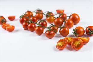 فروش انواع گوجه گلخانه ایی