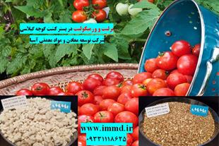 کشت هیدوروپونیک گوجه فرنگی