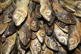 عمده فروش ماهی خشک و پودر ماهی