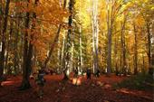 جنگل مرسی سی