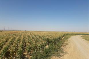فروش ویژه زمین کشاورزی در نظر آباد کرج