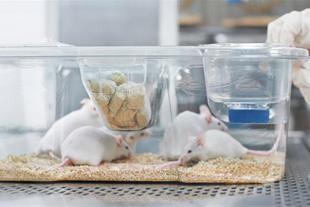 تامین انواع حیوانات آزمایشگاهی مورد نیاز محققین و