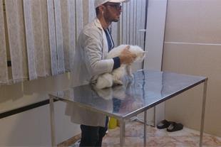 کلینیک حیوانات خانگی توسکا