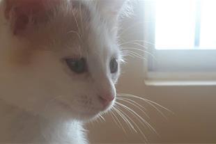 واگذاری گربه اصیل
