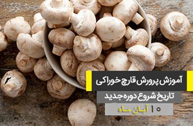Mushroom breeding in Isfahan - 1