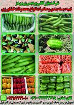 تهیه و بسته بندی میوه تره بار صادراتی