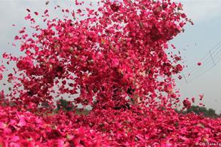 خرید و فروش گلاب