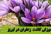 آموزش کاشت زعفران در تبریز