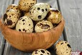 فروش تخم بلدرچین