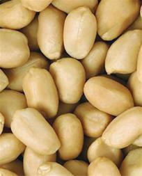 فروش بادام زمینی چینی - قیمت عمده بادام زمینی