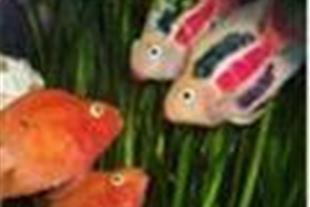 آموزش استفاده از هواده در مزارع پرورش ماهی