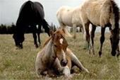 آموزش غیرحضوری پرورش اسب