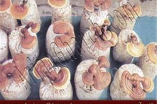 تهیه بستر قارچ، خاک پوششی قارچ، تجهیزات تولید قارچ