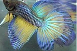 آموزش پرورش ماهیان زینتی ( آکواریومی )