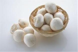 فروش کمپوست و بذر قارچ خوراکی و تجهیزات پرورش قارچ