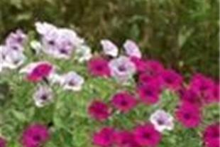احداث فضای سبز ، طراحی 3 بعدی ، تولید گل و گیاه