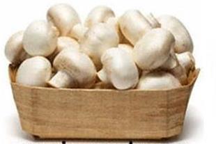 مواد اولیه و تجهیزات سالن های پرورش قارچ خوراکی