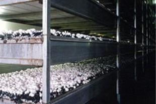 عرضه کننده انواع کمپوست قارچ ومواد اولیه قارچ
