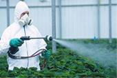 تولید حشره کش کشاورزی