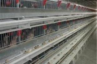 قفس های مرغ تخمگذار  بسمه تعالی