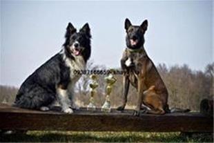 واردات سگ از اوکراین و روسیه