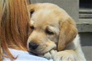 پانسیون درمان مشاوره خرید فروش انواع حیوانات سگ