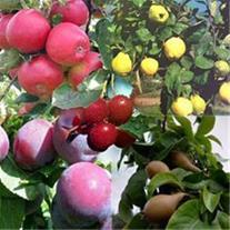 فروش بذر درختان میوه