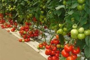 مجهزترین مرکز فروش قطعات گلخانه در اراک