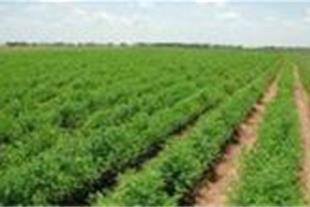 فروش استثنایی زمین کشاورزی و صنعتی قزوین