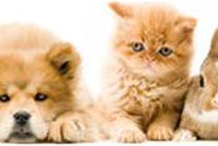 معاینه ، واکسیناسیون ، درمان حیوانات خانگی