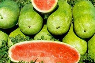 بذر گوجه فرنگی ریوگراند 09199762163