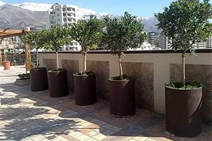 ارسال درختان میوه و غیر میوه -درختان تزئینی