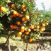 باغچه ای زیبا با درختان جوان و متنوع با قیمت مناسب