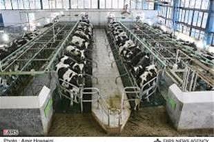 فروش زمین کشاورزی با مجوز گاوداری در آبیک قزوین