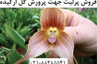 فروش پرلیت جهت پرورش گل ارکیده