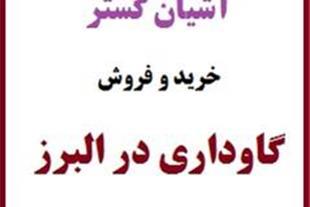 فروش گاوداری با مجوز شیری فعال در البرز