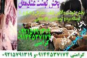 فروش گوشت و آلایش (زبان ، مغز دل و جگر و..) گوساله
