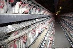 قفس مرغ تخمگذار،کبک،بلدرچین و...