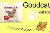 خاک گربه گود کت