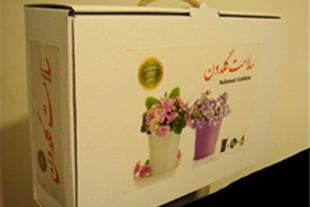 پکیج گل و گیهان زینتی