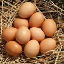 فروش تخم مرغ رسمی و محلی تک زرده و دو زرده