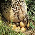 فروش تخم بلدرچین صبح امروز