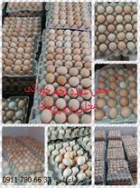 تخم مرغ محلی خوراکی