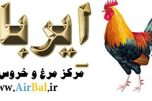 مرغ و خروس زینتی _ مرغ مینیاتوری-ایربال