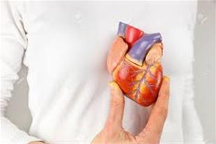 مولاژ آموزشی قلب