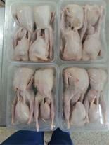 فروش بهترین گوشت منجمد و گرم بلدرچین کشتار روز