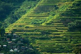 فروش زمین کشاورزی 2هکتاری