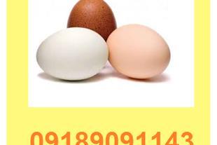فروش تخم نطفه دار