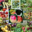 فروش نهال های میوه مثمر