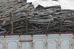 خرید وفروش انواع زغال و چوب